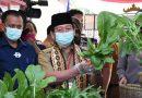 Pinang Jaya Kemiling Didaulat Jadi Kampung Tangguh, Ini Kriterianya