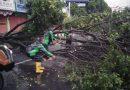 Hujan Lebat, Banjir dan Pohon Tumbang Hantui Kota Tapis Berseri